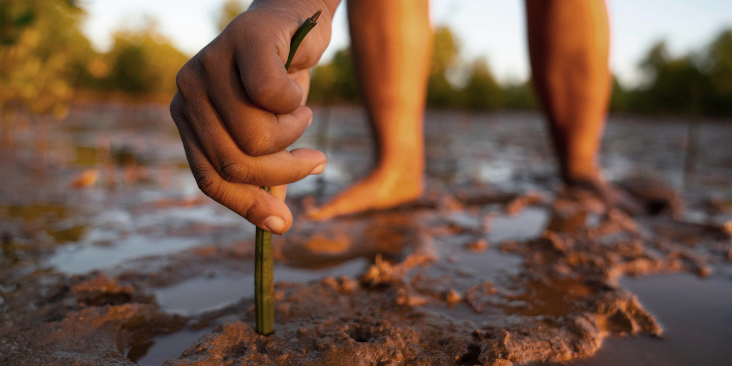 A hand reaching over to plant a small tree in some wet, fertile soil in Madagascar.